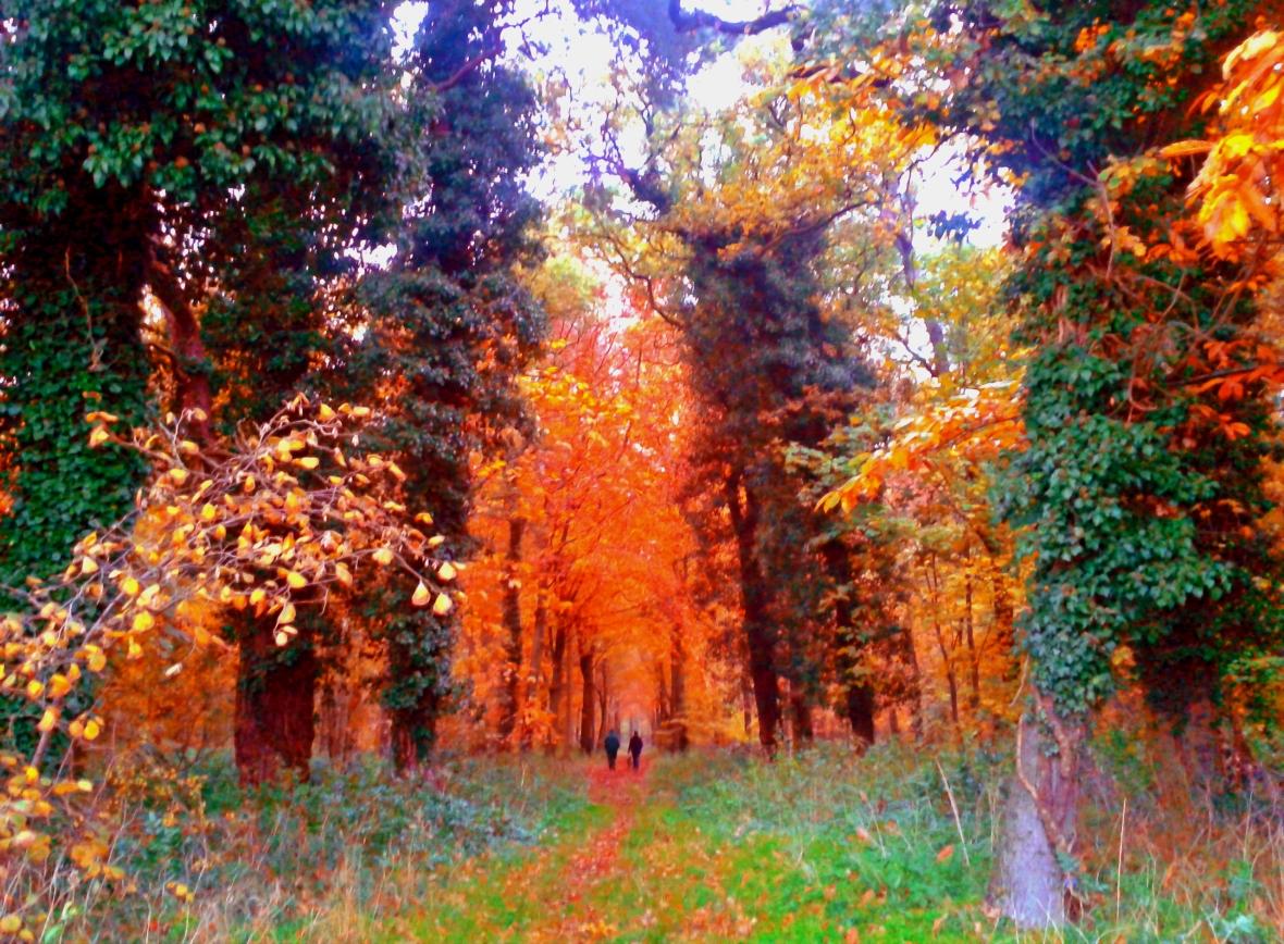 Thetford Forest by Sara Hardman