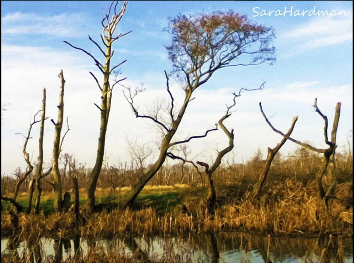 Norfolk trails by Sara Hardman Travels