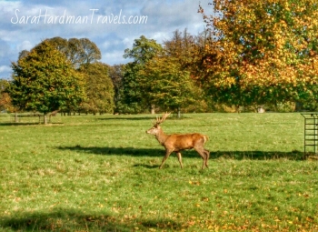 Sara Hardman Studley Royal deer Park