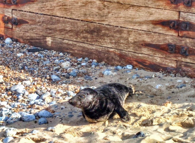 SaraHardmanTravels Horsey seals