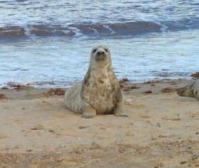 Seal Spotting inNorfolk