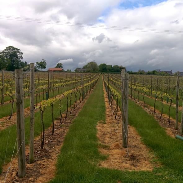 English Wine week - Sara Hardman Travels