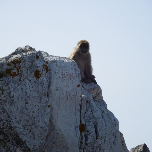Gibraltar - Sara Hardman Travels